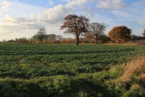 Highfield Park Trust