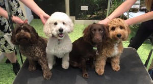 Dogtastic Dog Grooming