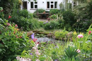 St Stephens Avenue Gardens - Open Garden for NGS