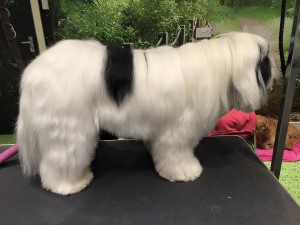 dogtastic grooming st albans