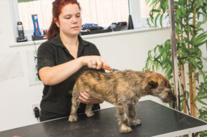 dogtastic logo_st albans grooming_day care